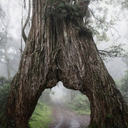 Into the Mystic, Arusha National Park, Tanzania
