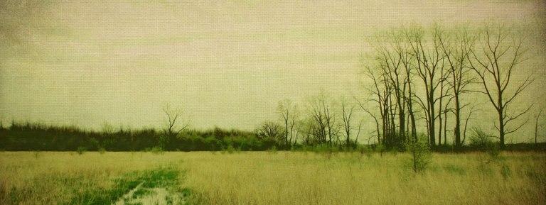 Field_Rob-Hunt
