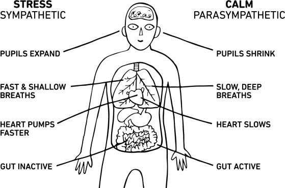 learn-body