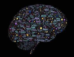 brain-998993_960_720